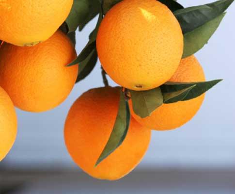 Fruta (arquivo)