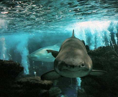 Tubarão (arquivo)