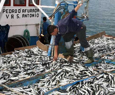 Pesca (arquivo)