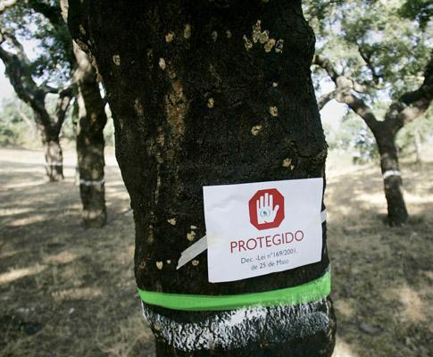 Protesto da Quercus contra abate de sobreiros