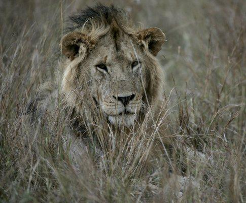 Migração de animais no Quénia