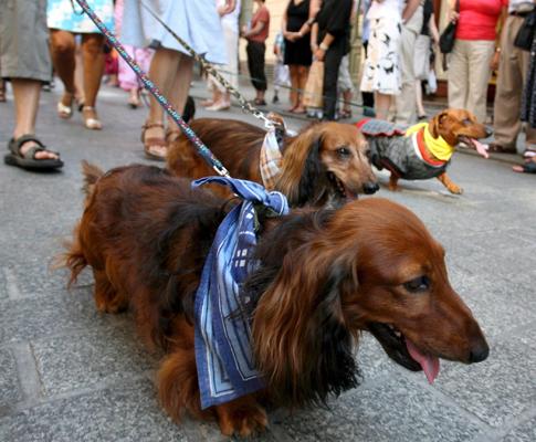 Desfile de cães na Polónia