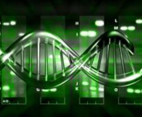 ADN [Arquivo]