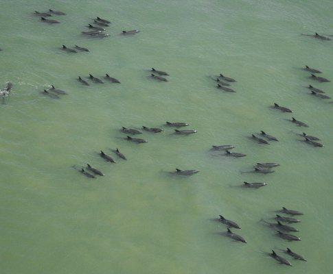 Golfinhos nas Filipinas
