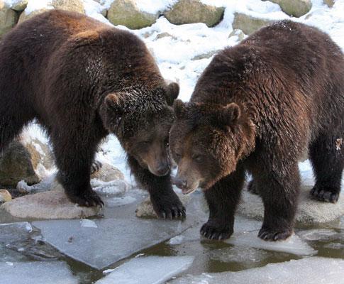 Ursos (arquivo)