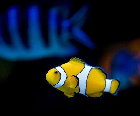 O zoo de Pequim chama-se «Blue». A zona do aquário é das mais visitadas