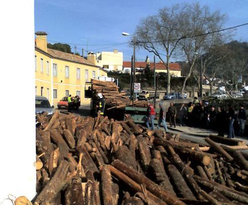 Troncos de madeira cortam EN247