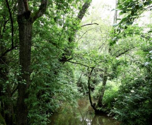 Lontra do Parque Biológico de Gaia (ESTELA SILVA /LUSA)