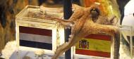 Julho: o polvo Paul, grande figura do Mundial