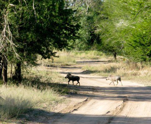 Parque Nacional da Gorongosa (FERNANDO PEIXEIRO/LUSA)
