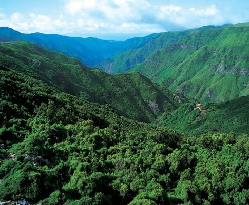 Floresta Laurissilva da Madeira