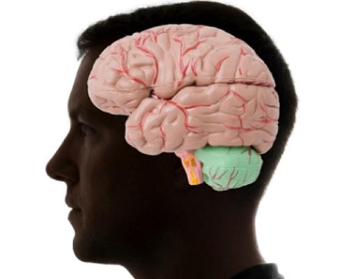 Cérebero - Idade Maior