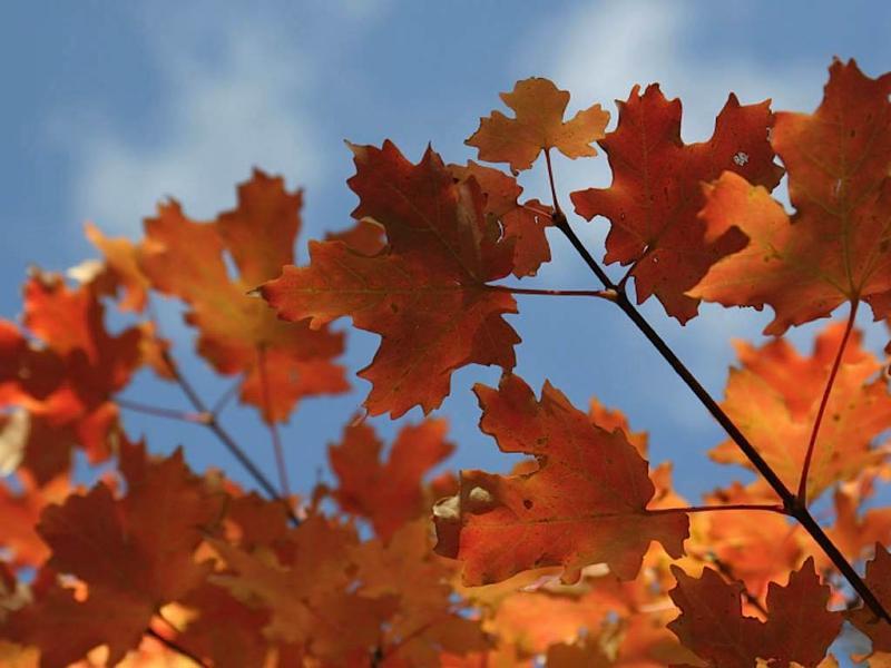 Outono (arquivo)