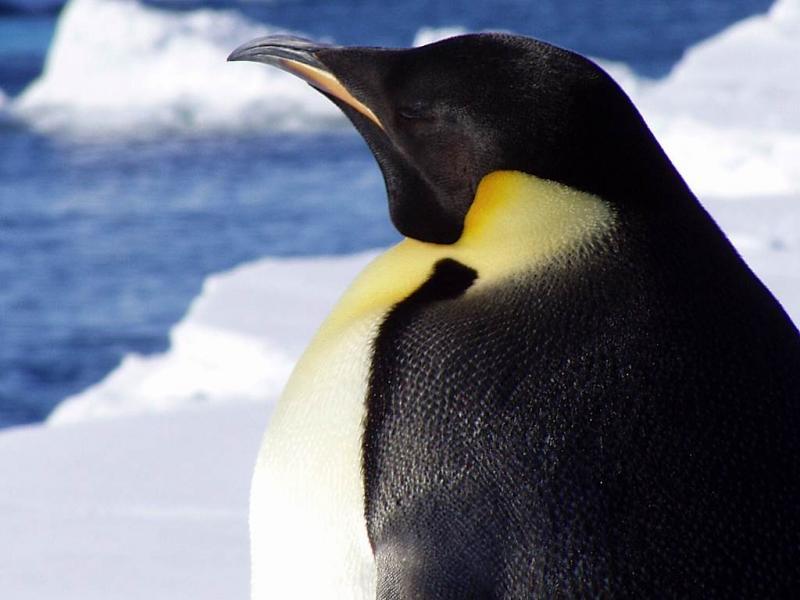 Pinguim (arquivo)