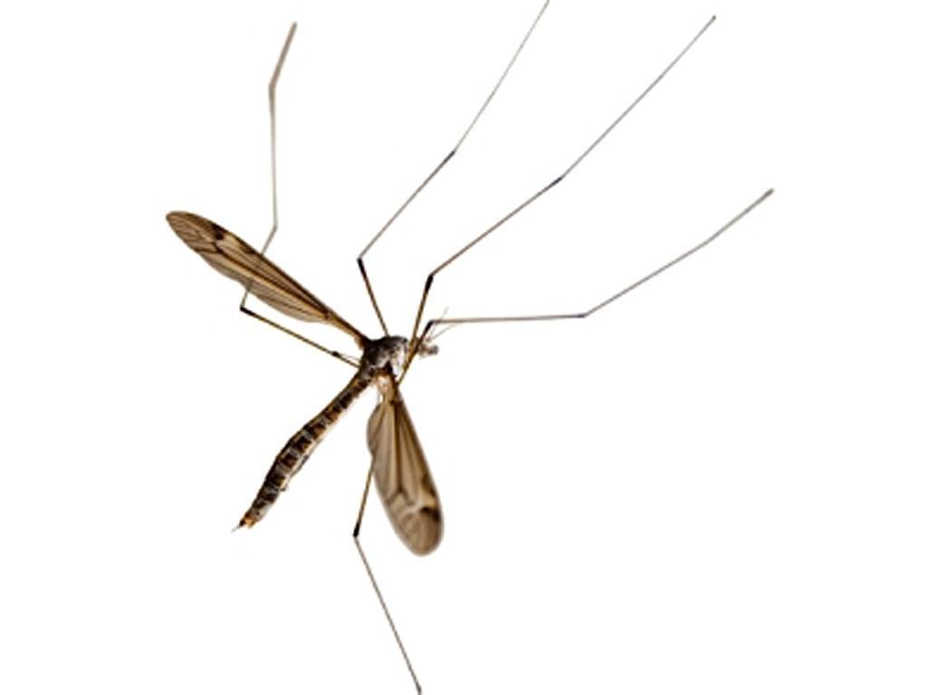 Mosquito (arquivo)