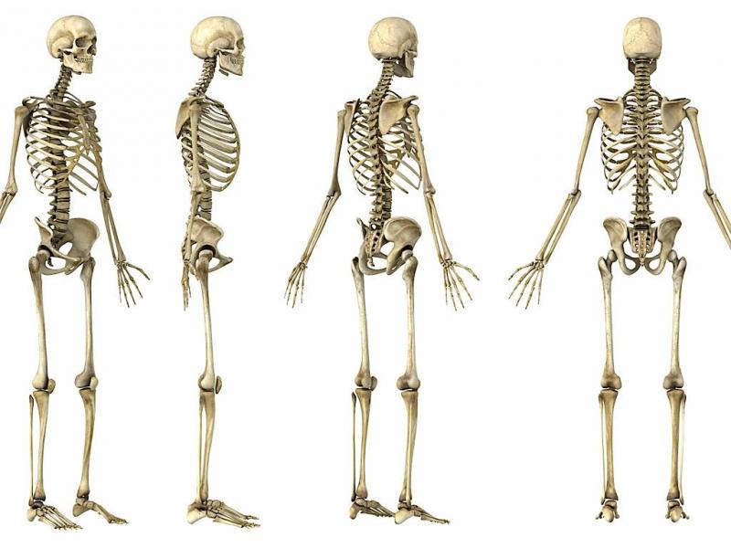Esqueleto (arquivo)