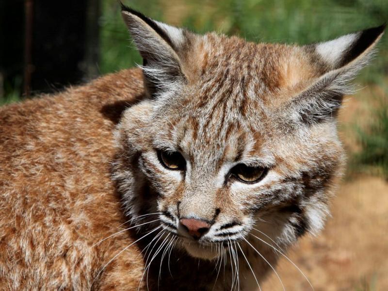 Novos animais no zoo de Lagos [LUIS FORRA/LUSA]