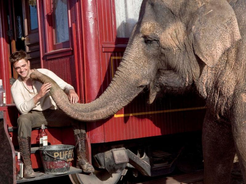 Água aos Elefantes - passatempo