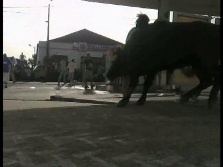 Largada de touros em Benavente