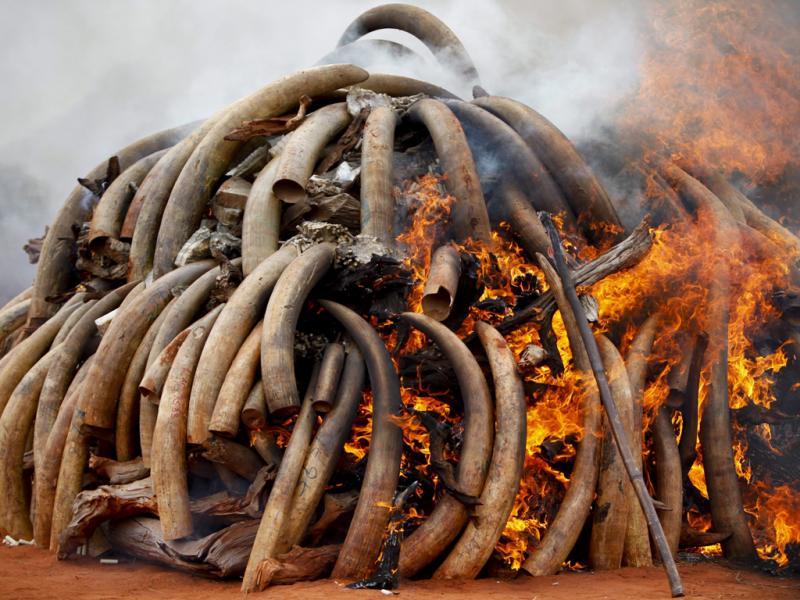 Quem matou os elefantes?