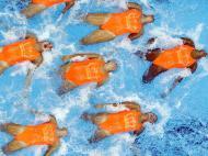 Mundiais de natação: imagens fantásticas
