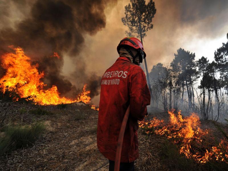 Incendio Em Nelas Nuno Andre Ferreiralusa