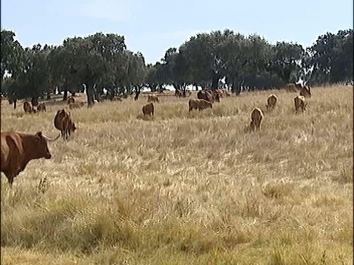 Agricultores alvo de assaltos