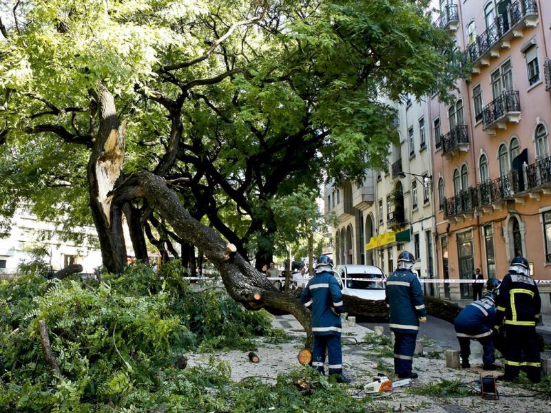 Árvore cai em Lisboa (Lusa/José Sena Goulão)
