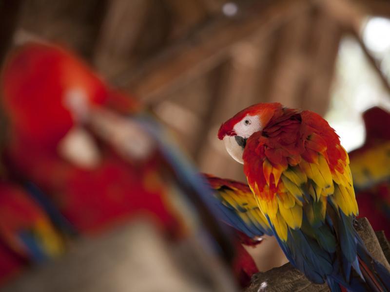 Papagaio (foto de arquivo)  Victor Ruiz/Reuters