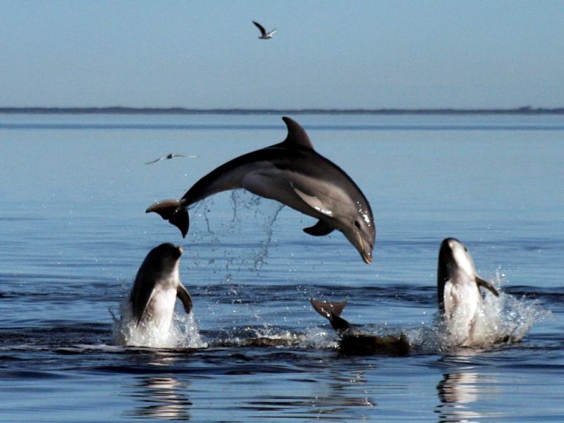Austrália: Descoberta nova espécie de golfinhos