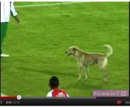 Cão no Santa Fé-Botafogo