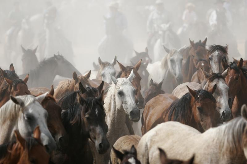 Cavalos Ibéricos Selvagens», um livro de Paulo Caetano