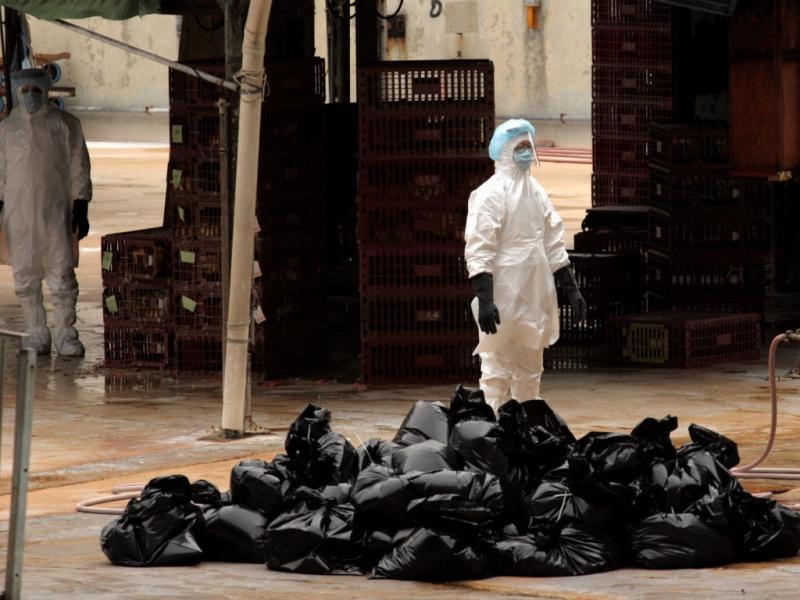 Gripe das aves: 17 mil galinhas abatidas [Reuters]