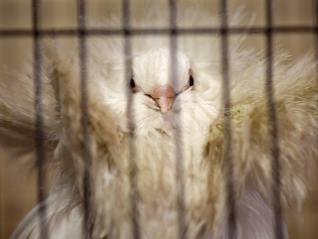Pássaros exóticos na Índia (EPA/PIYAL ADHIKARY)