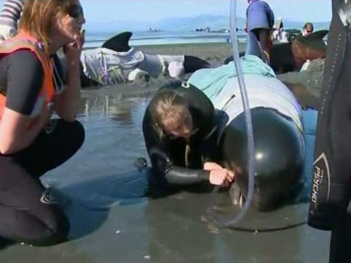 Baleias na Nova Zelândia