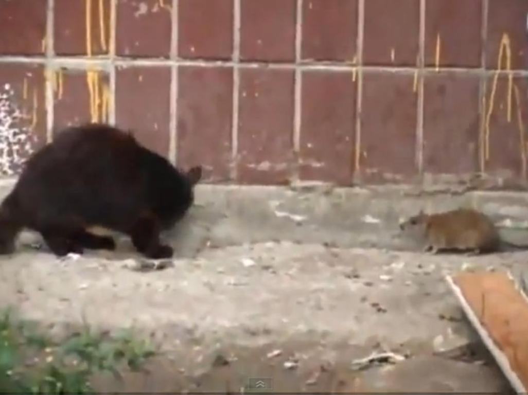 rato e gato