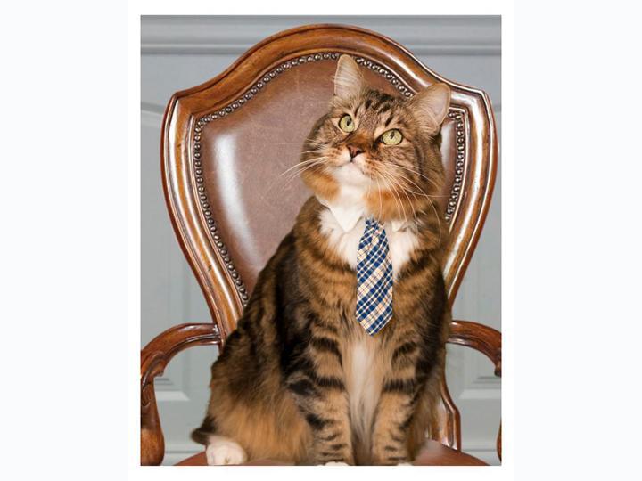 Hank, candidato ao senado dos EUA