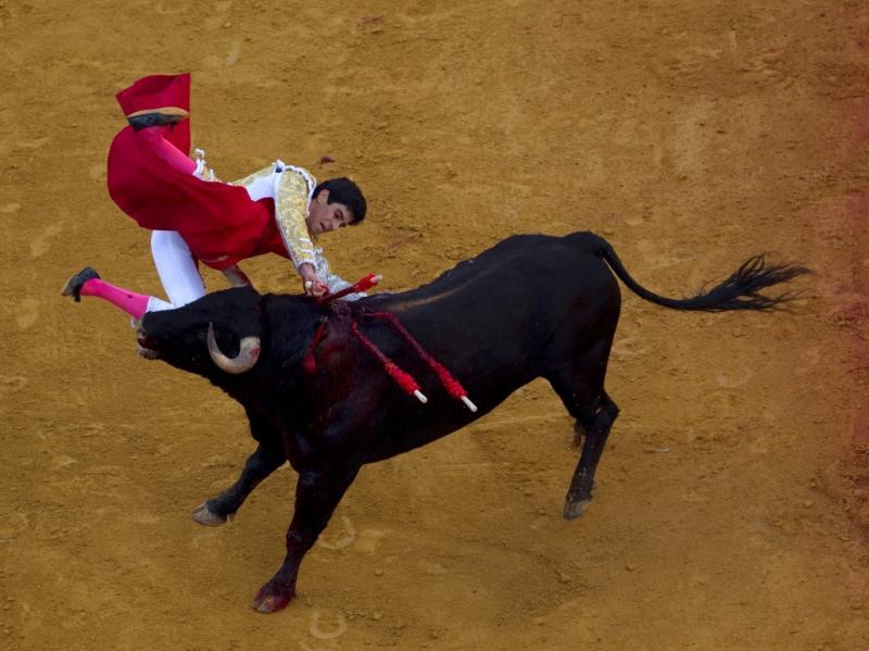 E desta vez o touro vingou-se...