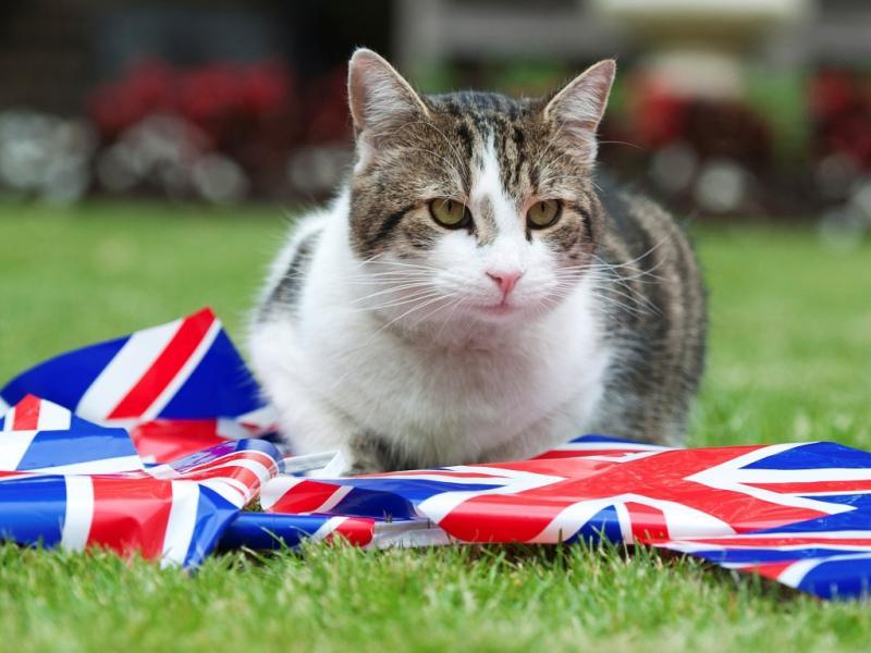 Até o gato festejou o Jubileu