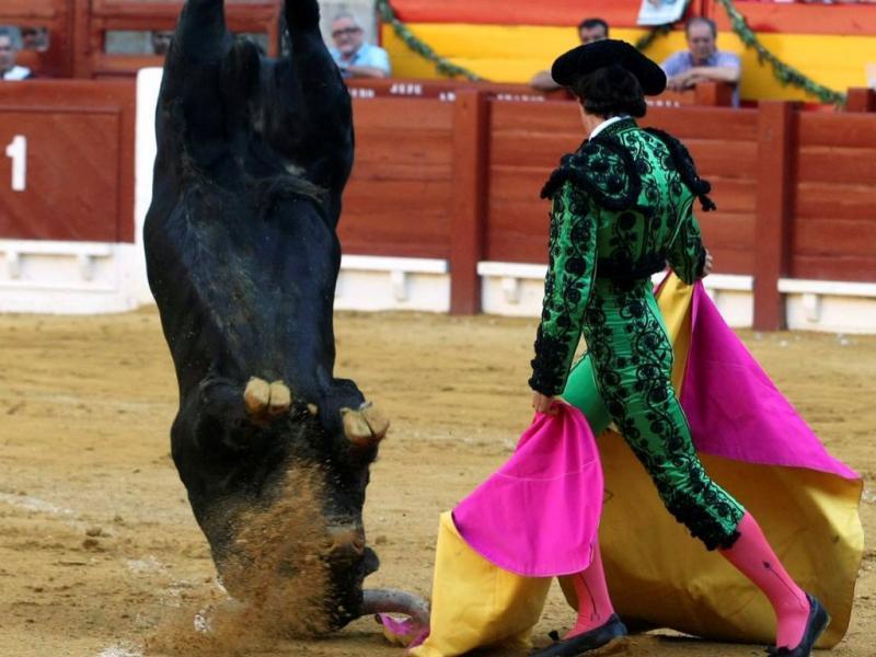 Touro dá cambalhota em tourada de Alicante (Epa)