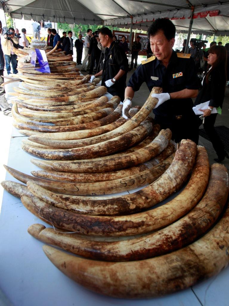 África e Ásia os piores no combate ao tráfico de animais