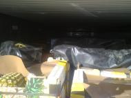 103 quilos de cocaína escondidos em contentores e navios de Lisboa (foto PJ)