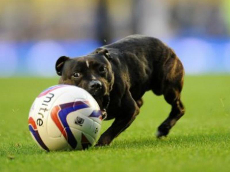 Cão goleador