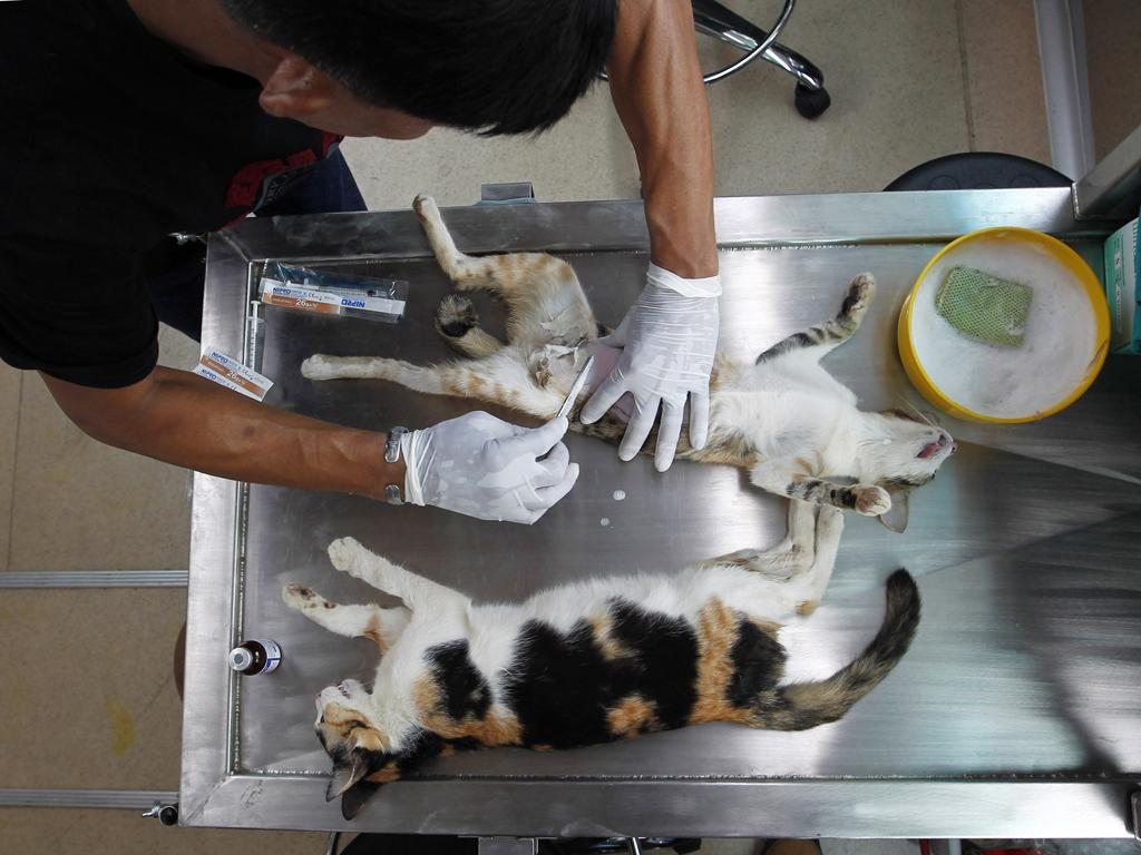 Animais no veterinário (Reuters)