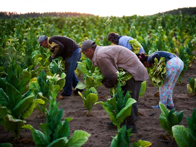 Agricultura (Lusa/EPA)