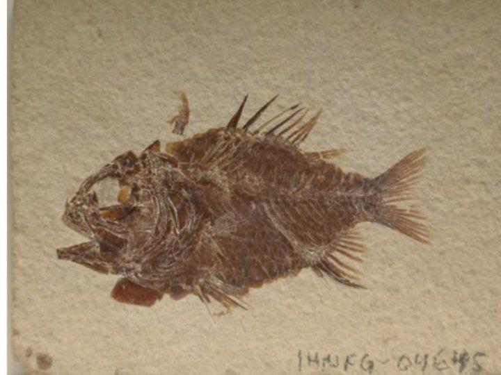 Descobertos fósseis de novas espécies de peixes com 110 milhões de anos [EPA]