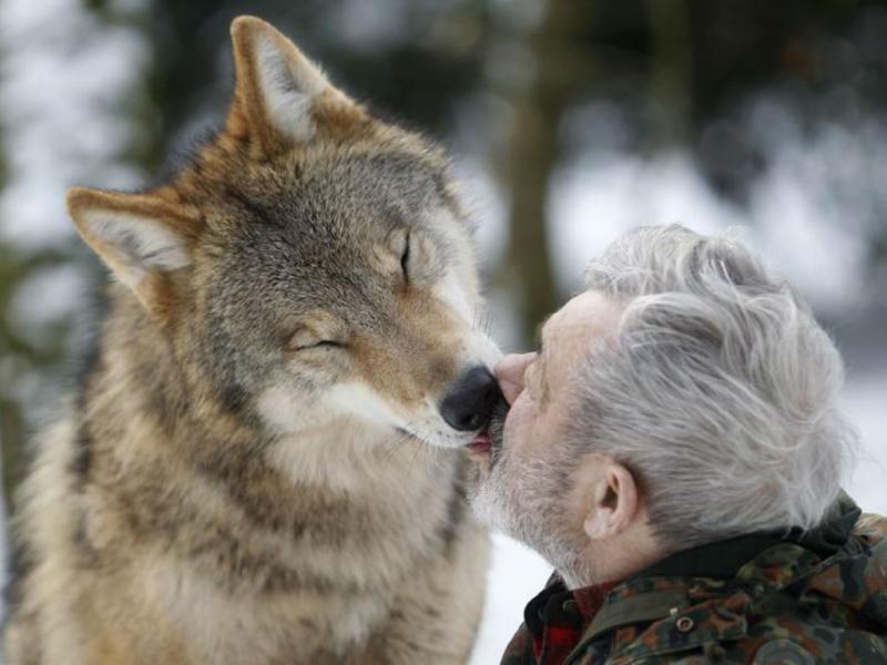 Werner Freund, o homem que vive com os lobos (REUTERS/Lisi Niesner)