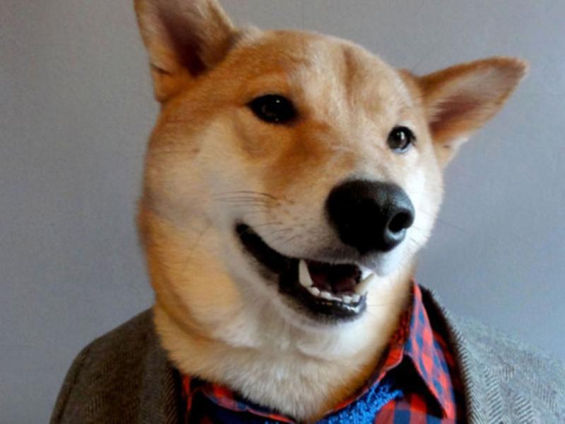 Tumblr Menswear Dog, um cão cheio de estilo que dá dicas aos homens de como se devem vestir