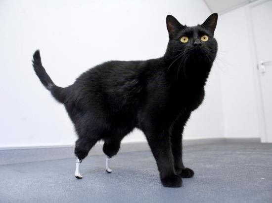 Animais deficientes vivem felizes com ajuda de próteses