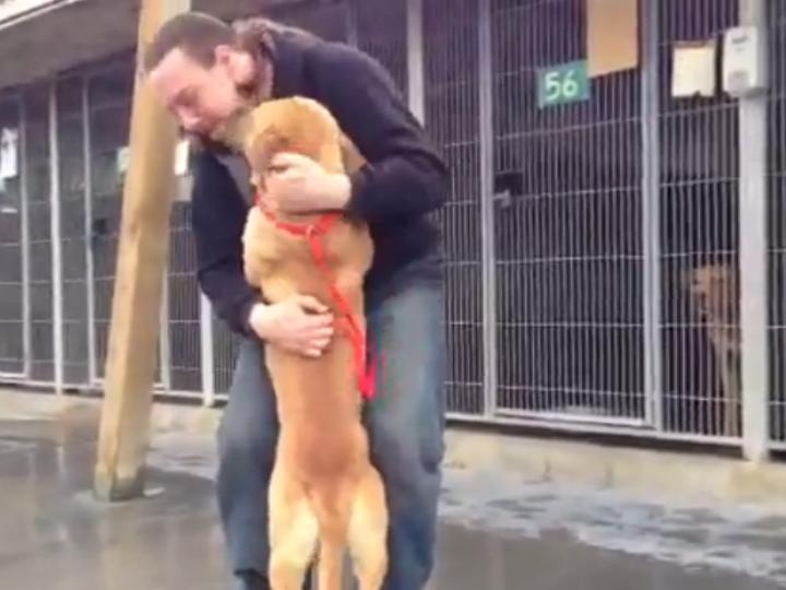 Dono reencontra cão graças a Facebook